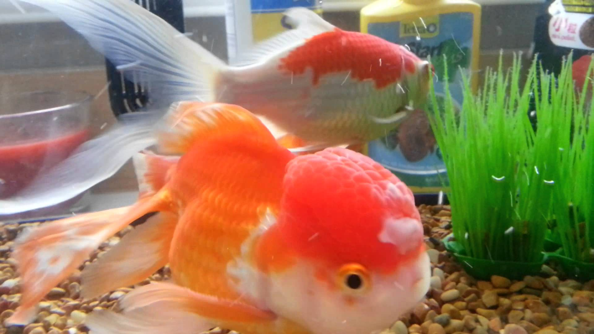 Fish Diseases That Are Transmitted To Humans And Why That Should Concern  You in 2018 - Fish Disease